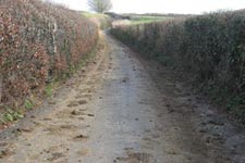 picture of a Broadwindsor narrow lane